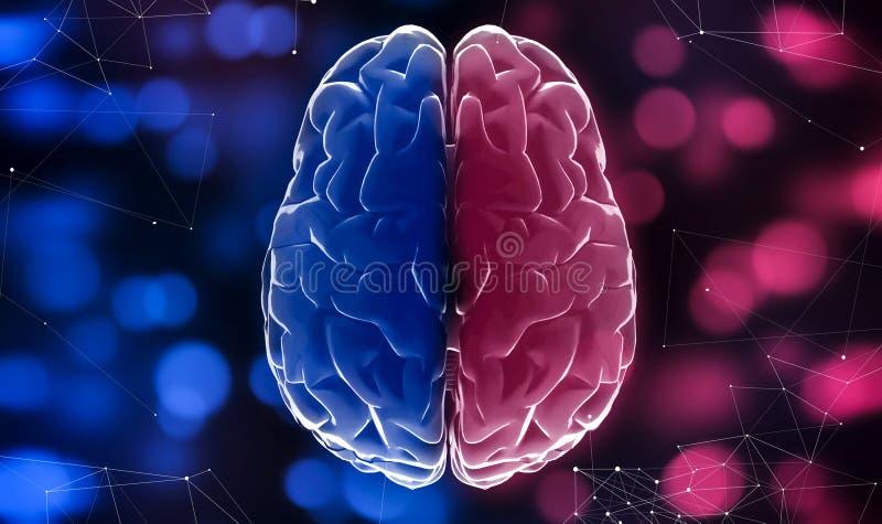 Blåa och röda halvor av hjärnan, suddiga ljus bakgrund, slut upp vektor illustrationer