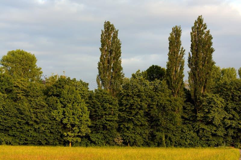 blåa oklarheter brukar landskytrees arkivfoton