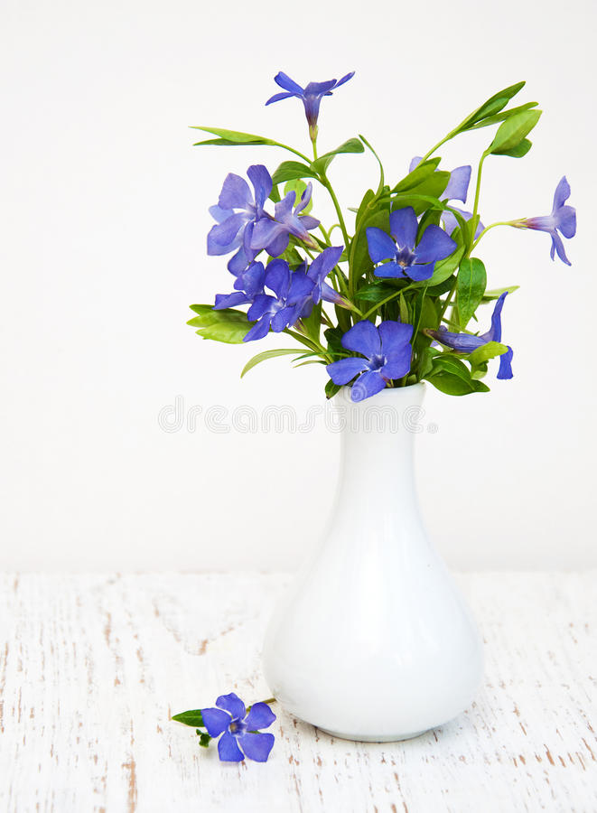 Blåa Perwinkle blommor royaltyfria bilder