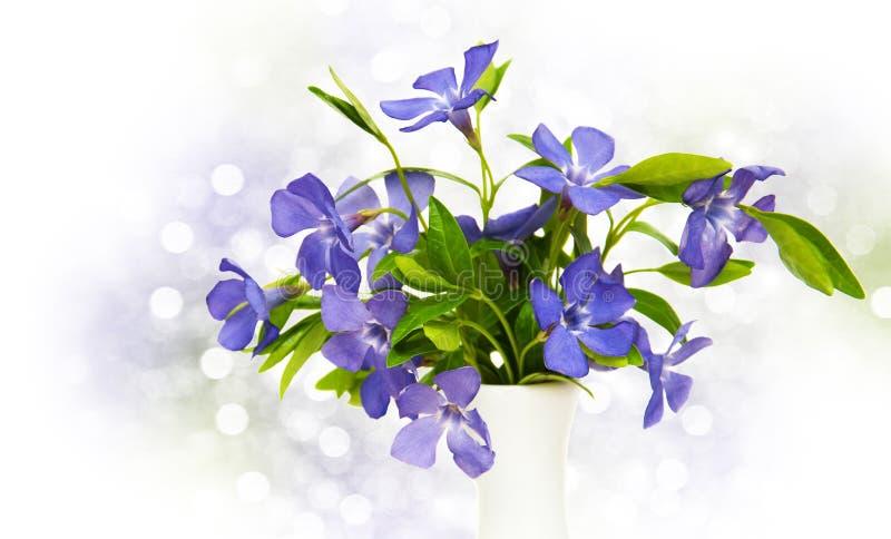 Blåa Perwinkle blommor arkivfoton