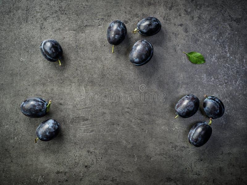 Blåa plommoner på mörk bakgrund arkivfoton