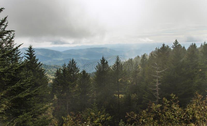 Blåa Ridge Parkway - Richland balsam förbiser dimmigt royaltyfri bild