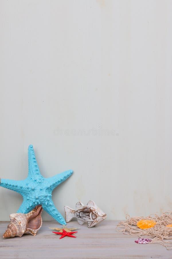 Blåa sjöstjärna och snäckskal på ett ljus - grå sjaskig bakgrund Sommartid för havet och semester royaltyfri fotografi