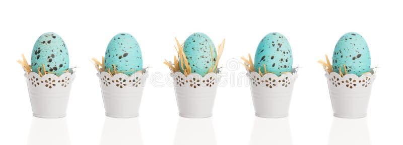 Blåa spräckliga ägg arkivfoton