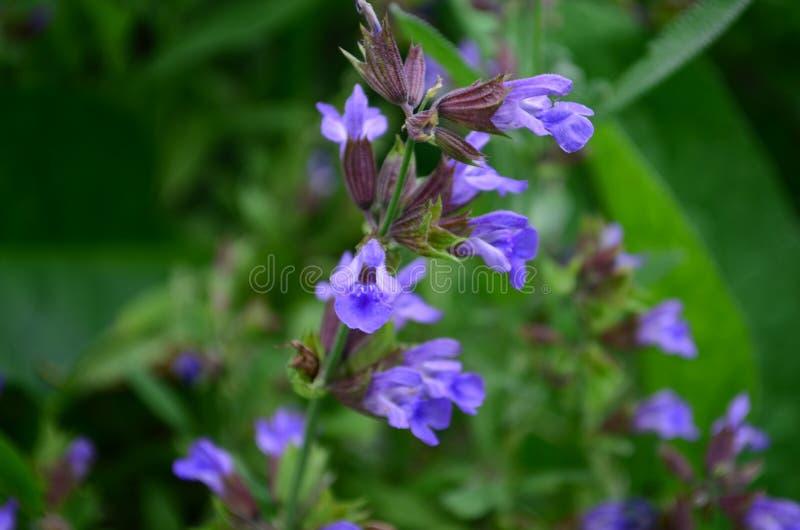 Blåa visa blommor på en filial i trädgården arkivfoto