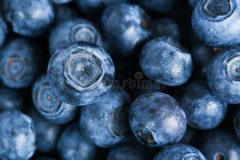 blåbär royaltyfri fotografi