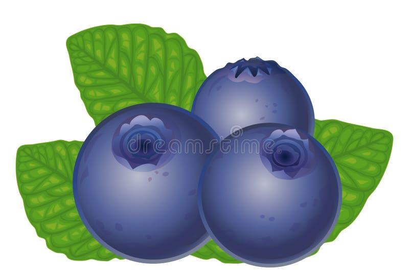 blåbär stock illustrationer