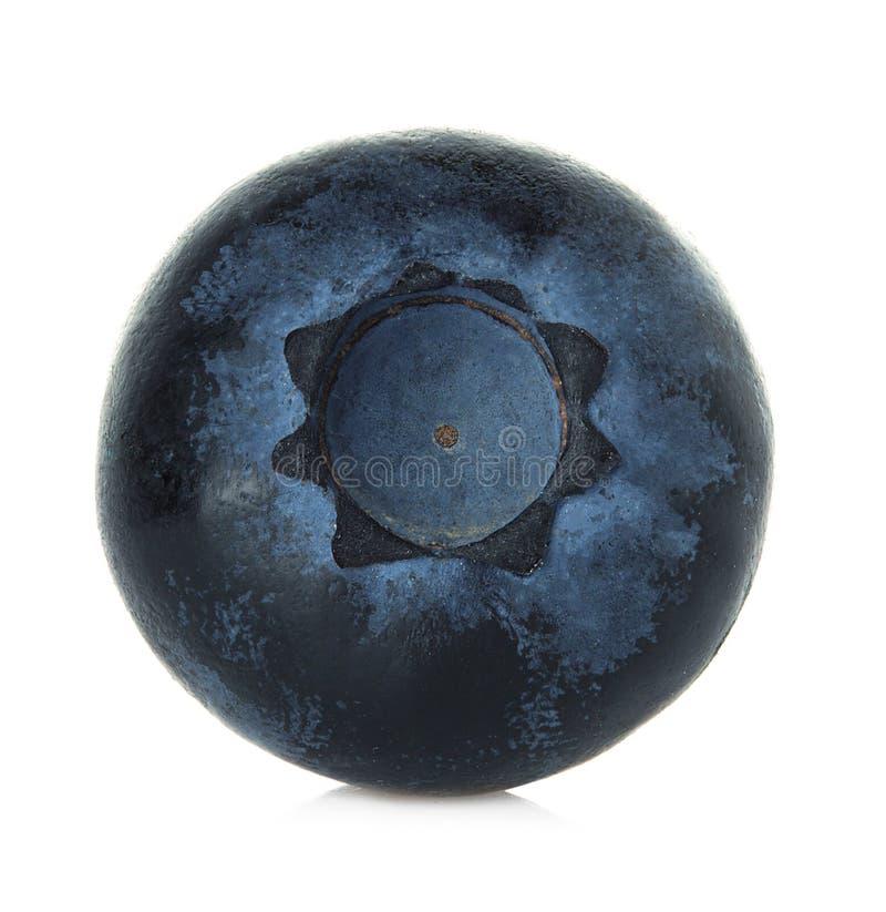 blåbär isolerad white arkivfoto