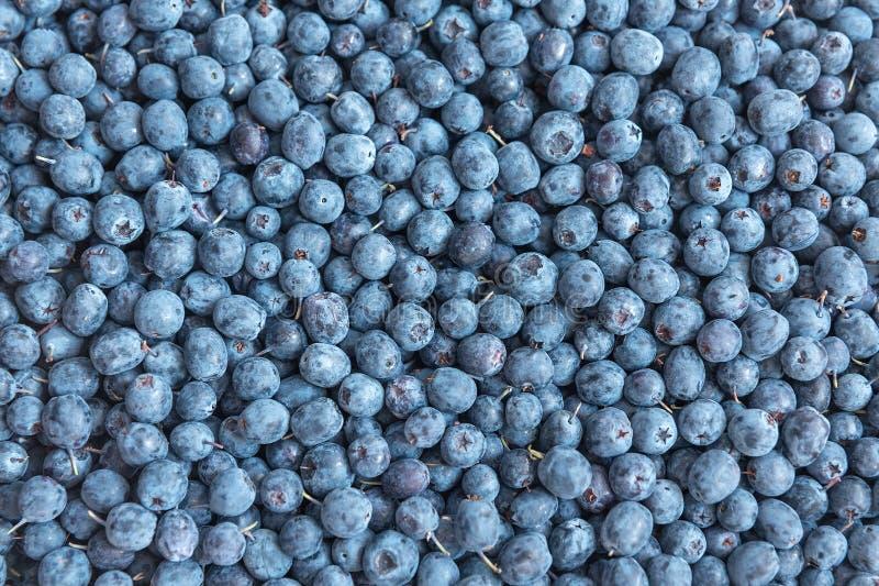 Blåbär matbakgrund royaltyfri bild