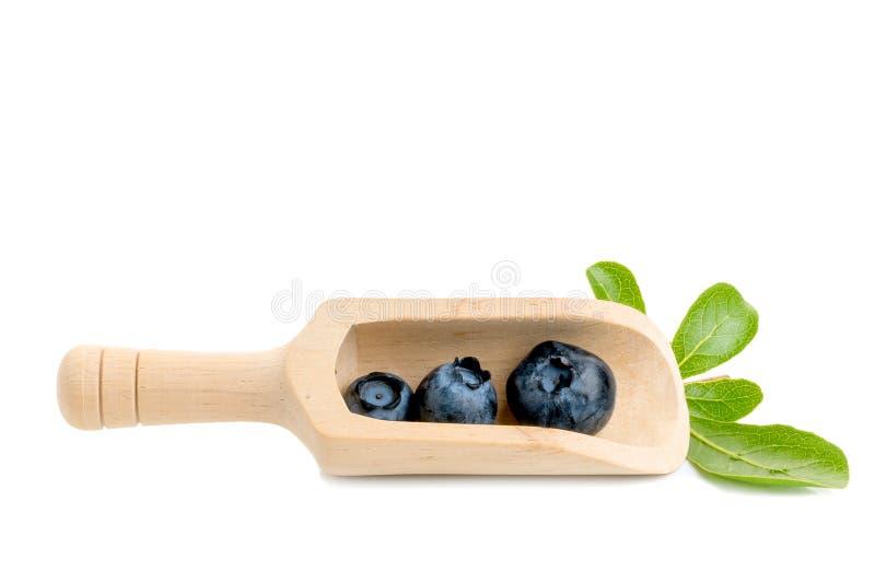 Blåbär Två nya blåbär med sidor som isoleras på vit bakgrund Med den snabba banan royaltyfri foto