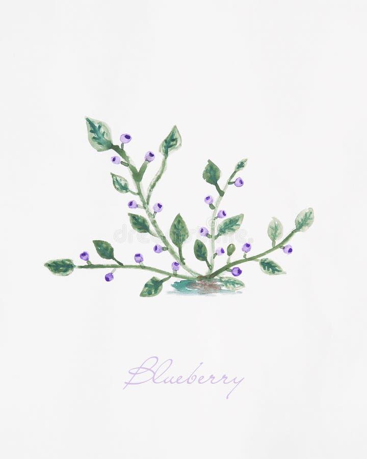 Blåbärbuske med illustrationen för fruktvattenfärgteckning stock illustrationer