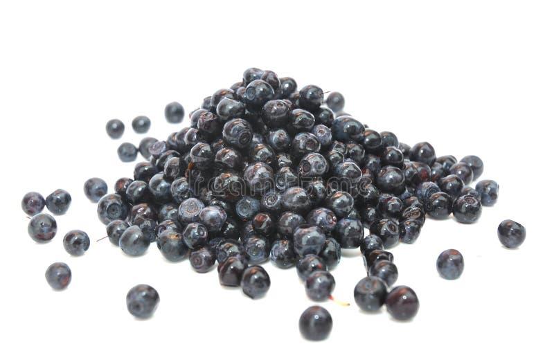 Blåbärfrö, Vacciniummyrtillus, medicinska Herb Seeds, blåbär, perenn, Blaeberry som isoleras på vit Använt för öga royaltyfri bild