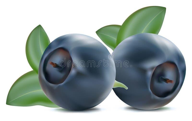 blåbärleaves stock illustrationer