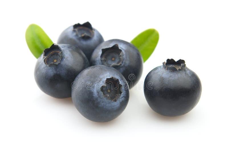 blåbärleaves royaltyfri foto