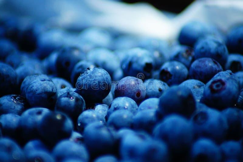Blåbärplockning i den näringsrik sommartiden som så är läcker och! arkivbilder