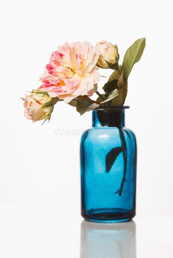 BlÃ¥glasflaska med rosenolja och rosa rosor pÃ¥ vit bakgrund. Aromatherapy fotografering för bildbyråer