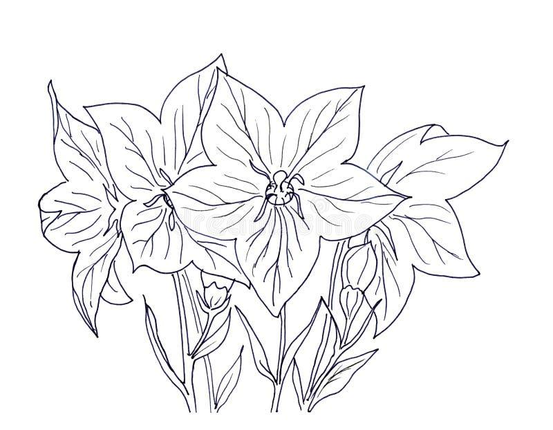 Blåklocka för handfärgpulverteckning stock illustrationer