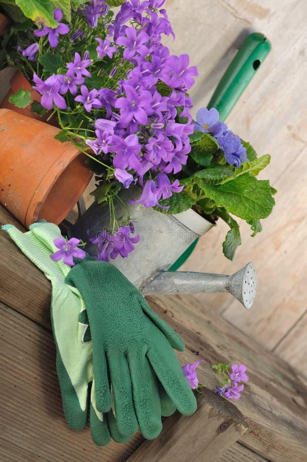 Blåklockor och arbeta i trädgården arkivfoton