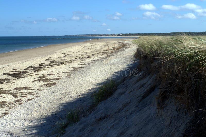 Blåsa havsgräs på Cape Cod på en älskvärd dag royaltyfri bild