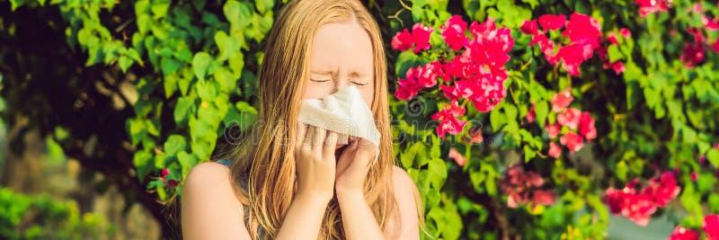 Blåsa näsa för ung nätt kvinna framme av att blomma trädet BANER för vårallergibegrepp, LÅNGT FORMAT royaltyfria bilder