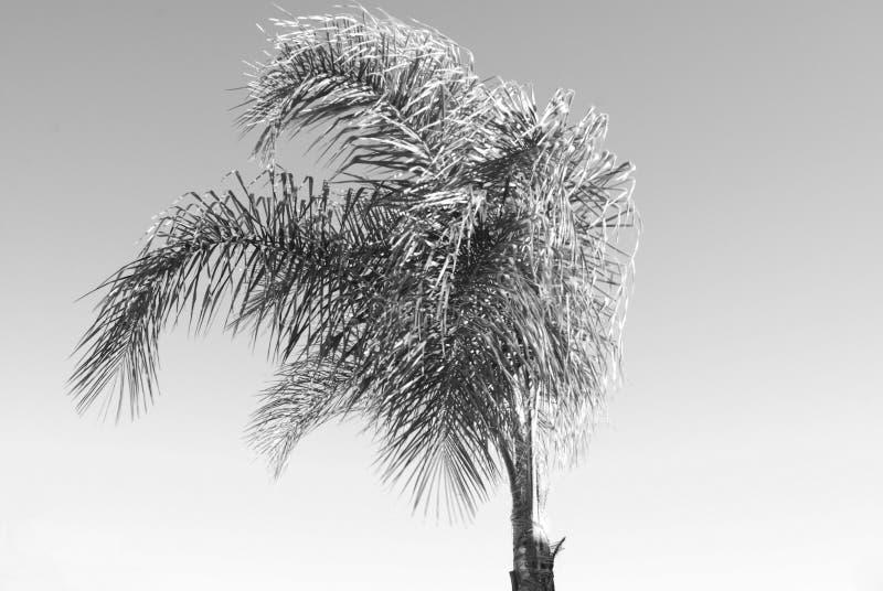 blåsig tree royaltyfri bild