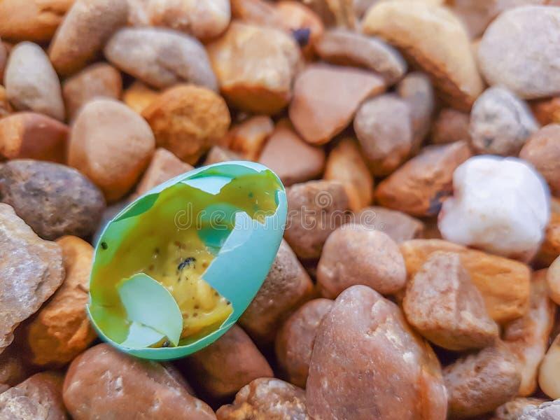 Blått ägg av en liten fågel i morgonen royaltyfri bild