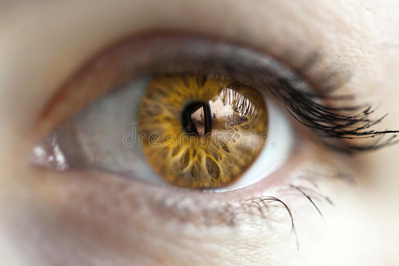 Blått öga för kvinnor royaltyfri foto