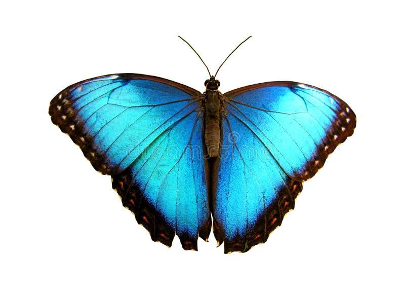 blått arkivbild