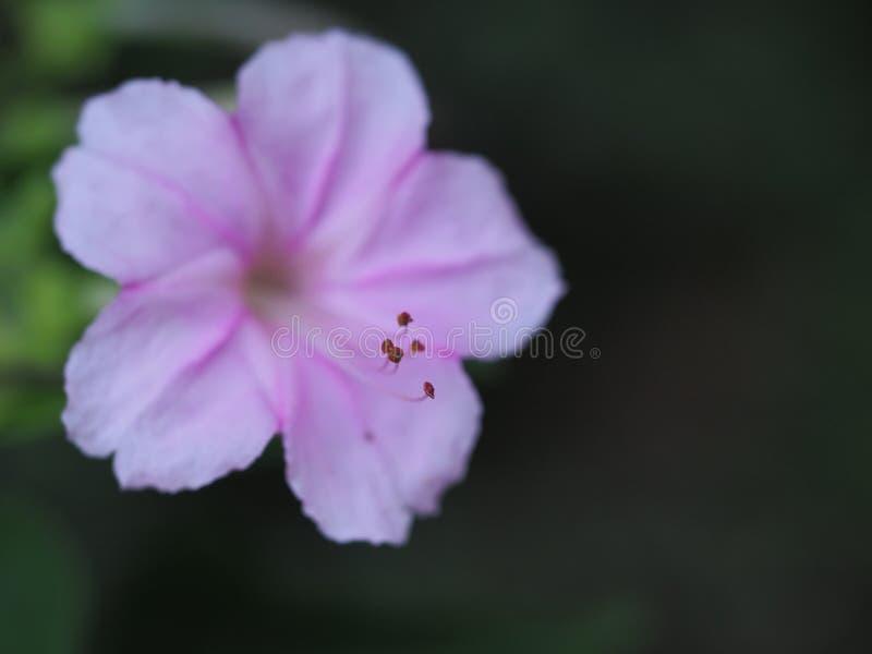 Blått av pollen royaltyfria bilder