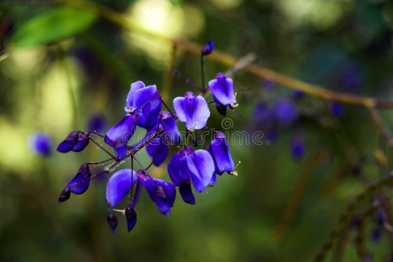 Blått blommar i vår royaltyfri foto