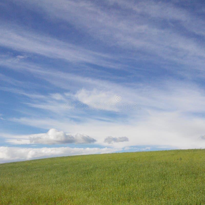 Blått och gräsplan fotografering för bildbyråer