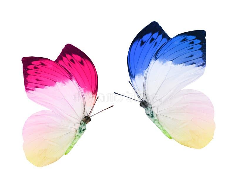 Blått- och pnkfjärilar royaltyfria foton