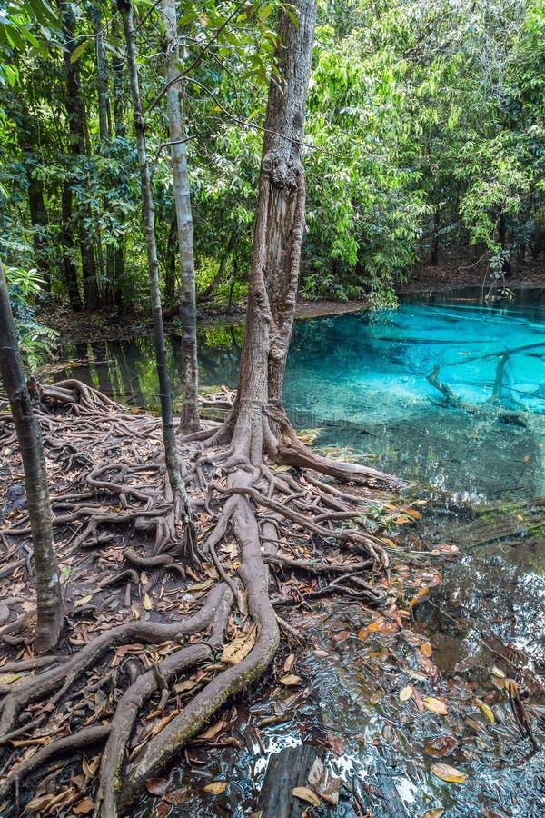 Blått pölKrabi landskap, Thailand arkivfoto