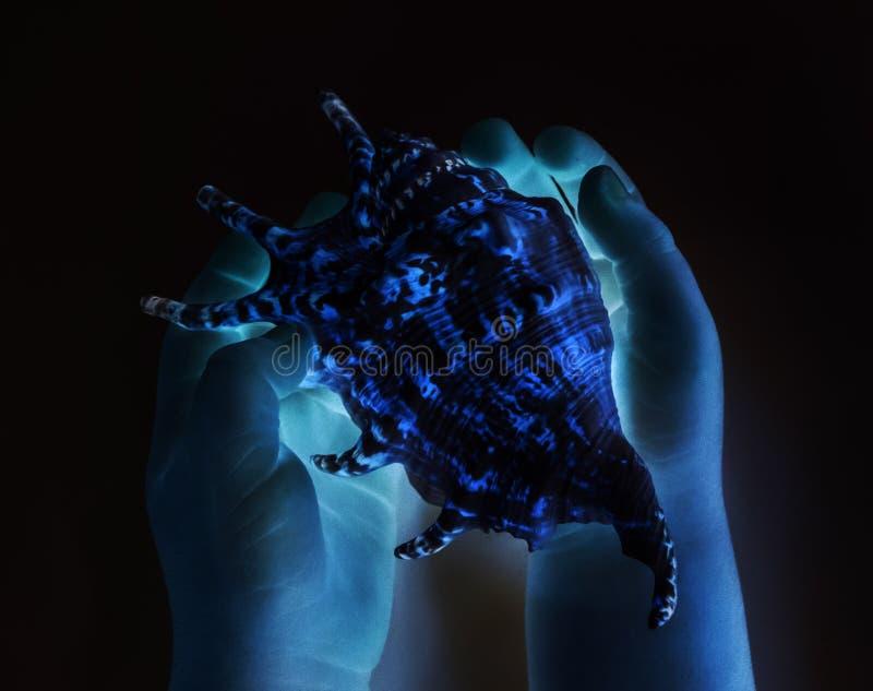 Blått skal, schosvit i händer royaltyfria foton