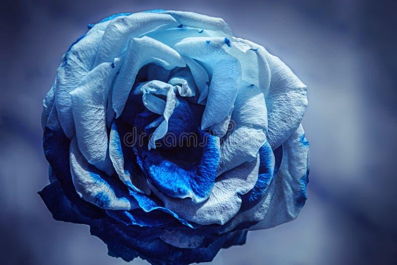 Blått steg med torkade kronblad arkivbild