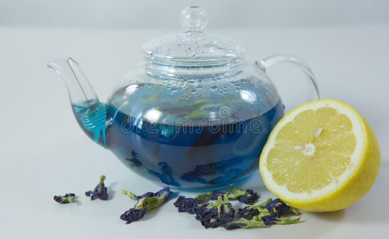 Blått te för fjärilsärta från blommaClitoria med citronfärg ch royaltyfri foto