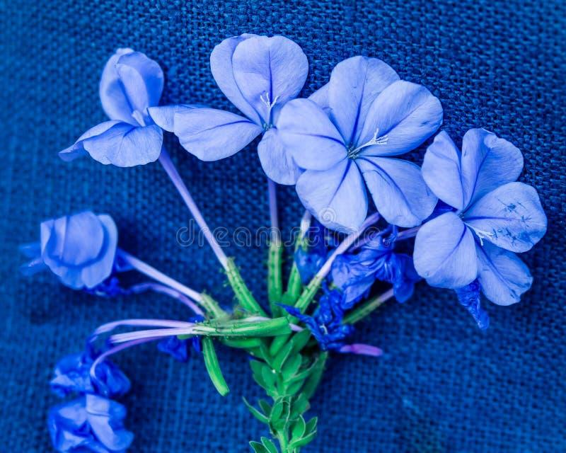 Blått-violett vanlig hortensiabukett royaltyfri fotografi