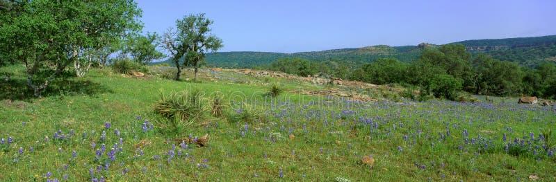 Blåtthättor i kullelandet, Willow City Loop Road, Texas arkivbild