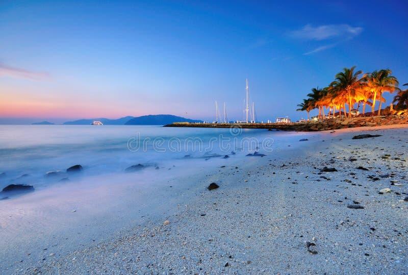 Blåtttimme på stranden med kokosnöttreen royaltyfria foton