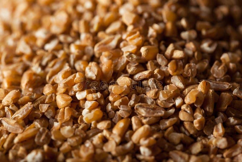 Blé criqué entier organique cru de grain photo stock
