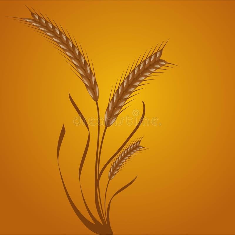 blé d'oreilles