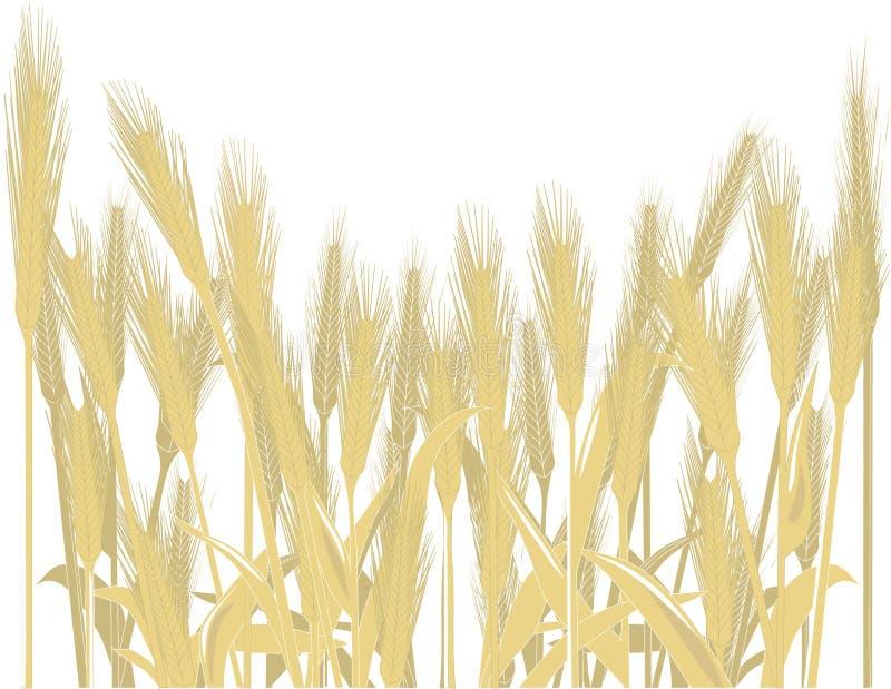 blé de zone