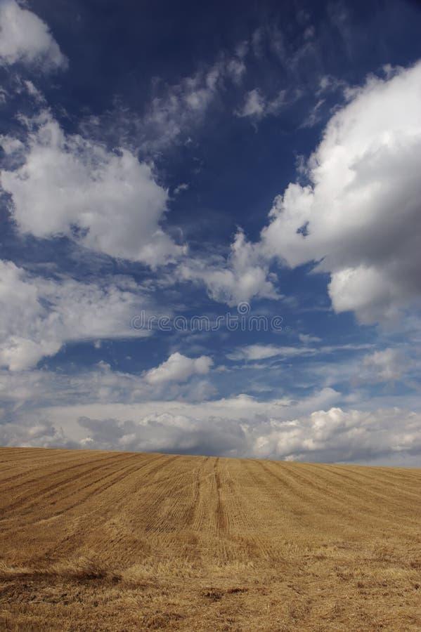 Blé et ciel photos libres de droits