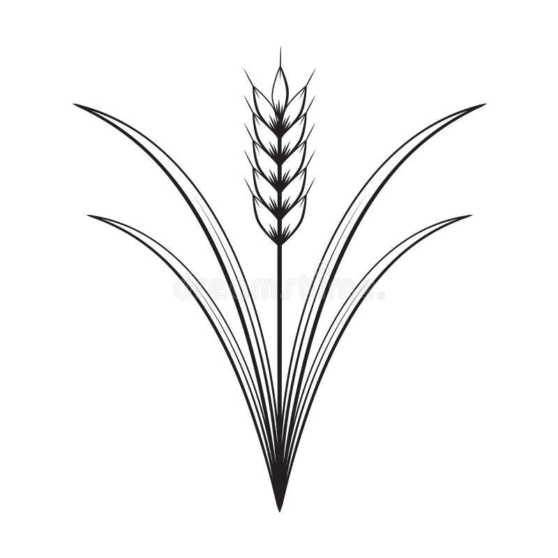 Blé graphique, vecteur illustration de vecteur