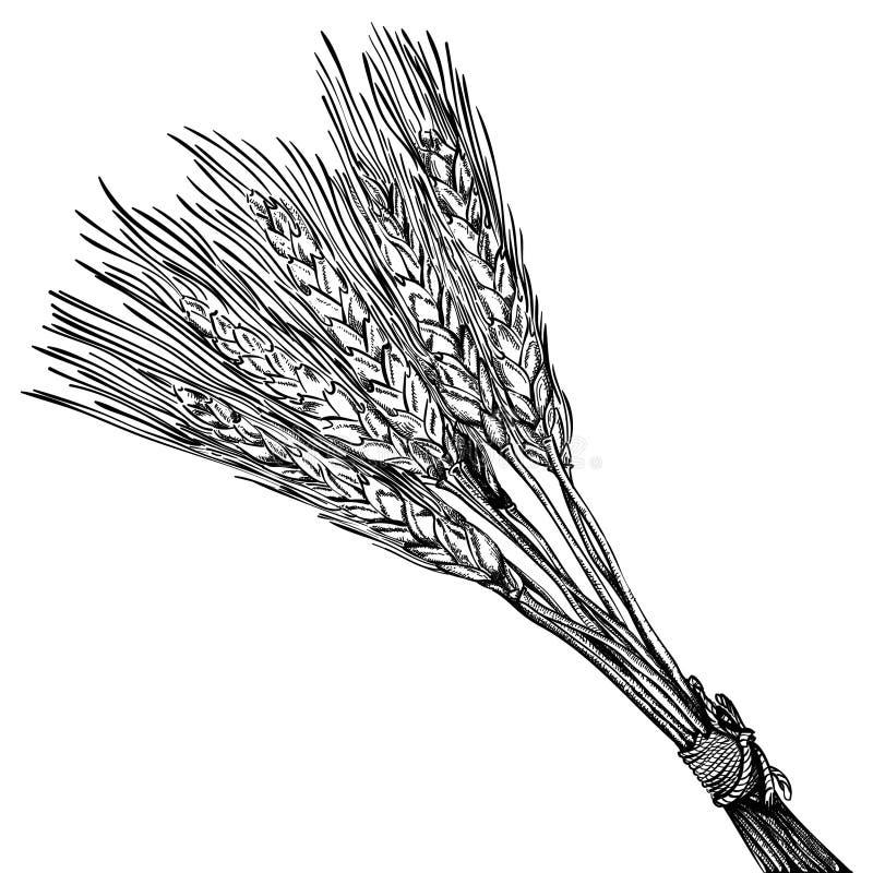 blé mûr illustration libre de droits