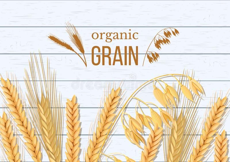 Blé, orge, avoine et seigle sur le fond en bois blanc Épillets de céréales avec le grain organique d'oreilles, de gerbe et de tex illustration libre de droits