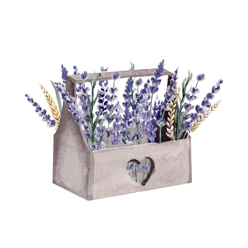 Blé peint à la main de céréale de boîte de la Provence d'aquarelle de lavande illustration stock