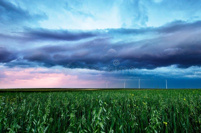 Blé vert sous un ciel de tempête photo stock