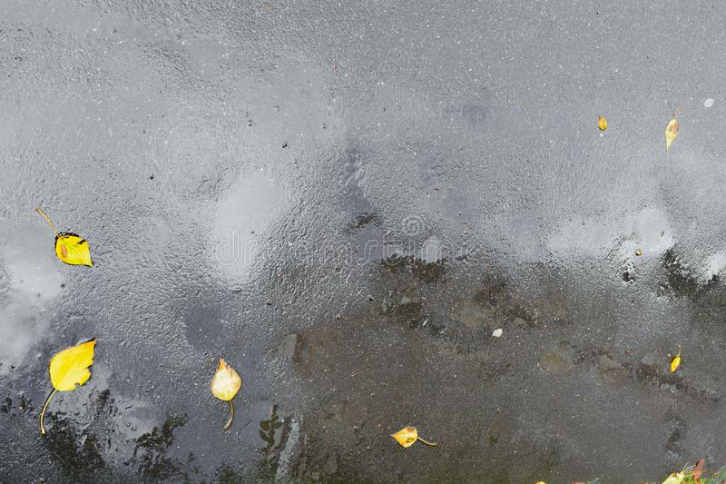 Blöta asfalttrottoar med pölar, regndroppar och höstsidor efter hällregn royaltyfri fotografi