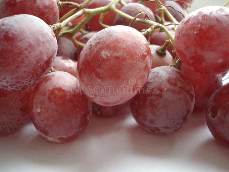 Blöta borsten av stora rosa druvor fotografering för bildbyråer